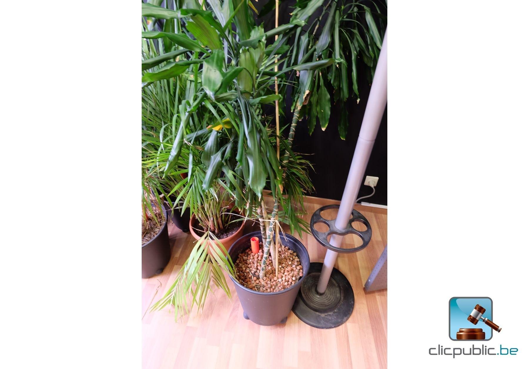 plantes lot de 6 plantes vertes en pot ref 126