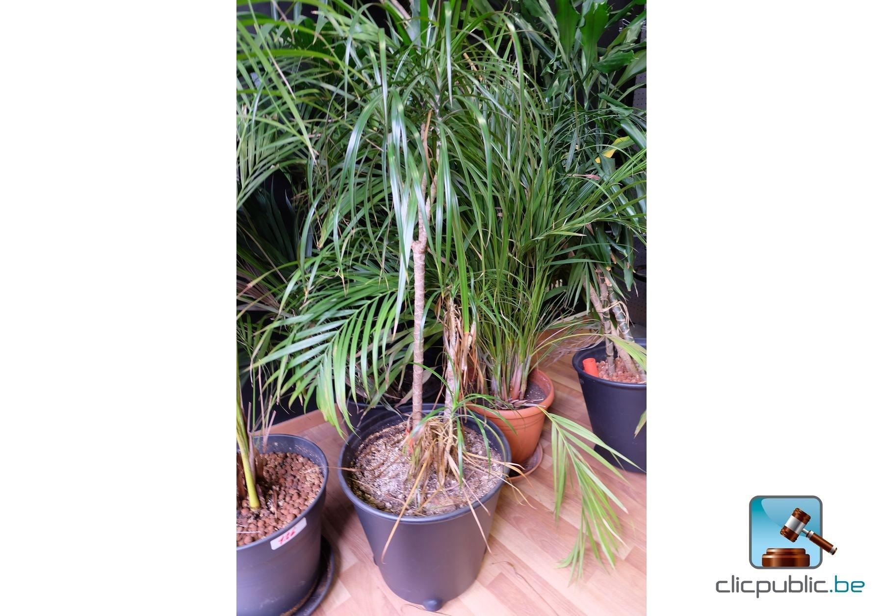 Plantes lot de 6 plantes vertes en pot ref 126 for Vente plante verte