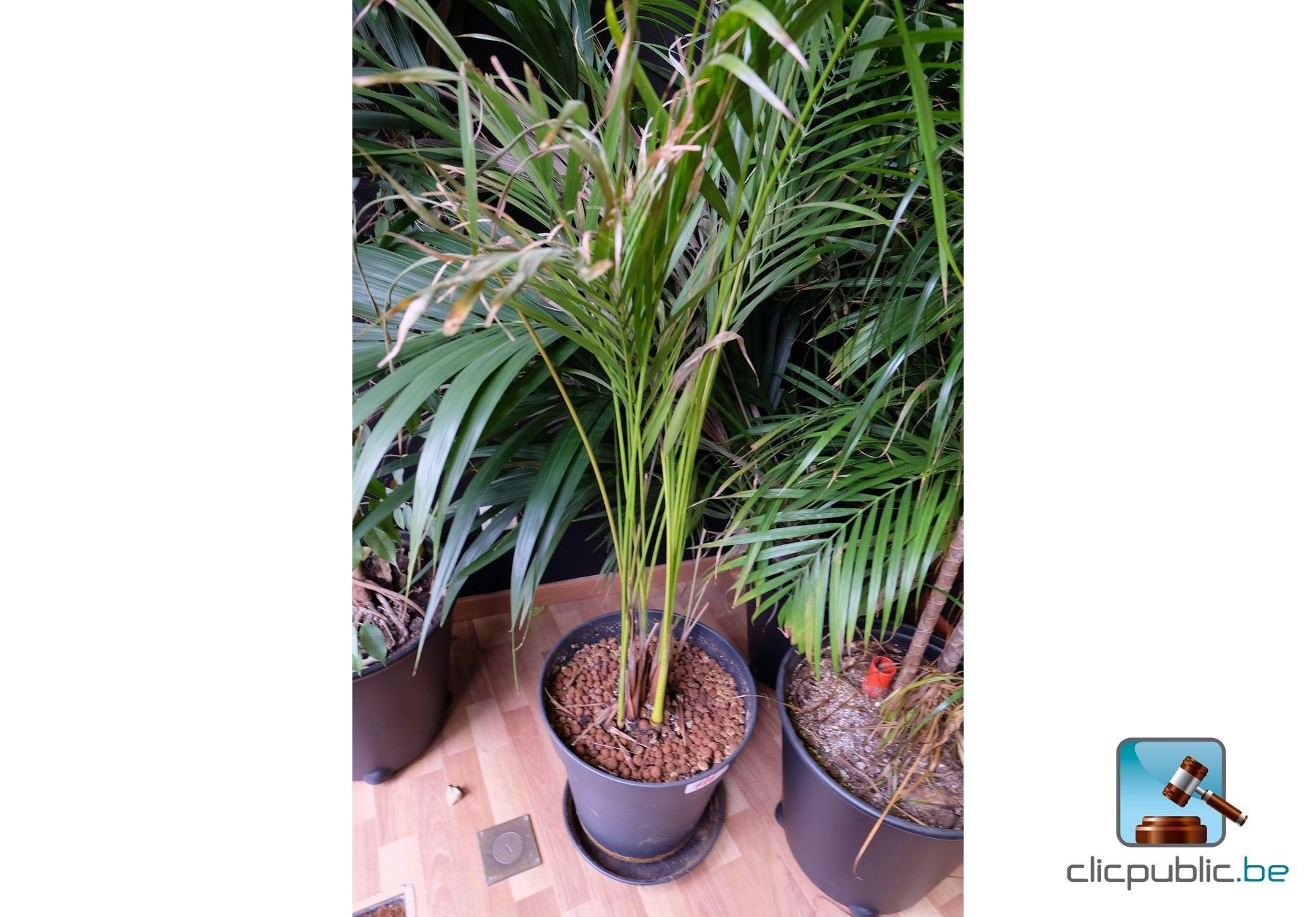 Plantes lot de 6 plantes vertes en pot ref 126 for Plantes vertes en ligne