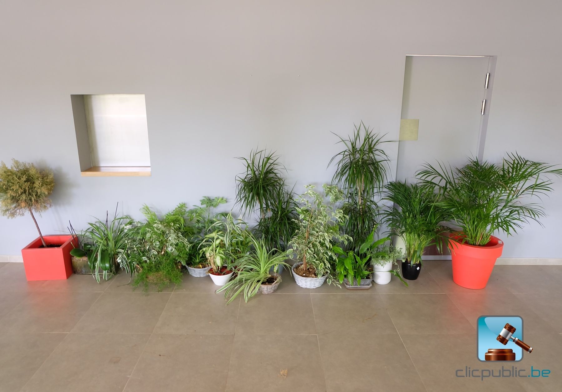 Lot de 14 plantes vivantes d 39 int rieur ref 5 vendre for Vente de plantes sur internet