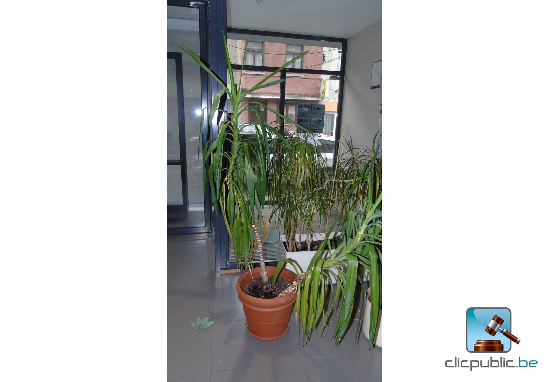 Plantes d 39 int rieur ref 10 vendre sur for Plante interieur en ligne